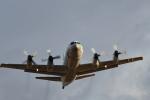 パラノイアさんが、厚木飛行場で撮影した海上自衛隊 P-3Cの航空フォト(写真)