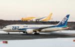うみBOSEさんが、新千歳空港で撮影したスクート 787-8 Dreamlinerの航空フォト(写真)