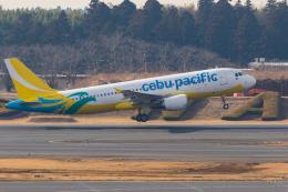 GOOSEMAN777さんが、成田国際空港で撮影したセブパシフィック航空 A320-214の航空フォト(飛行機 写真・画像)