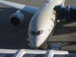 くまのんさんが、中部国際空港で撮影したエティハド航空 787-9の航空フォト(写真)