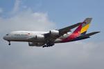 tsubasa0624さんが、成田国際空港で撮影したアシアナ航空 A380-841の航空フォト(飛行機 写真・画像)