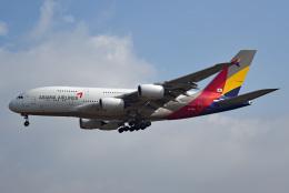 tsubasa0624さんが、成田国際空港で撮影したアシアナ航空 A380-841の航空フォト(写真)