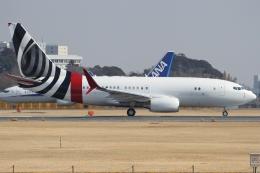 Wings Flapさんが、成田国際空港で撮影したBBJ One 737-7CJ BBJの航空フォト(写真)