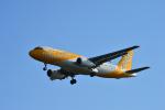 アップルゆこさんが、台湾桃園国際空港で撮影したスクート A320-232の航空フォト(写真)
