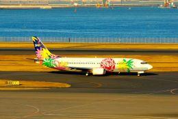 まいけるさんが、羽田空港で撮影したスカイネットアジア航空 737-4Y0の航空フォト(写真)