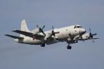 OMAさんが、岩国空港で撮影した海上自衛隊 OP-3Cの航空フォト(飛行機 写真・画像)