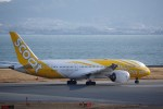chappyさんが、関西国際空港で撮影したスクート 787-8 Dreamlinerの航空フォト(写真)
