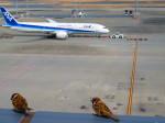 ひとつぼし / 航空YouTuberさんが、羽田空港で撮影した全日空 787-8 Dreamlinerの航空フォト(飛行機 写真・画像)