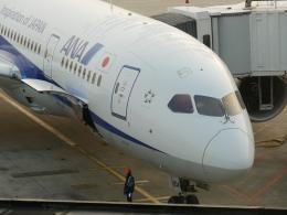 jjieさんが、上海浦東国際空港で撮影した全日空 787-8 Dreamlinerの航空フォト(飛行機 写真・画像)