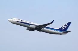 Billyさんが、福岡空港で撮影した全日空 737-881の航空フォト(飛行機 写真・画像)