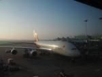 Tき/九州急行さんが、仁川国際空港で撮影したアシアナ航空 A380-841の航空フォト(写真)