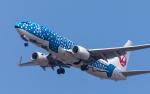 airbandさんが、羽田空港で撮影した日本トランスオーシャン航空 737-8Q3の航空フォト(写真)