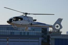 TUILANYAKSUさんが、東京ヘリポートで撮影したオートパンサー EC130B4の航空フォト(飛行機 写真・画像)