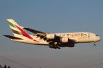 セブンさんが、成田国際空港で撮影したエミレーツ航空 A380-861の航空フォト(飛行機 写真・画像)