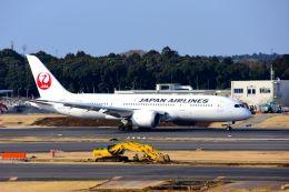 まいけるさんが、成田国際空港で撮影した日本航空 787-8 Dreamlinerの航空フォト(写真)