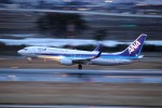 まっさんさんが、仙台空港で撮影した全日空 737-881の航空フォト(写真)