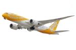 アイトムさんが、関西国際空港で撮影したスクート 787-8 Dreamlinerの航空フォト(写真)