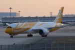 いっとくさんが、関西国際空港で撮影したスクート 787-8 Dreamlinerの航空フォト(写真)