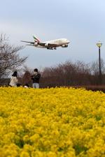 VEZEL 1500Xさんが、成田国際空港で撮影したエミレーツ航空 A380-861の航空フォト(写真)