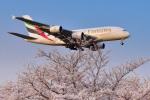 パンダさんが、成田国際空港で撮影したエミレーツ航空 A380-861の航空フォト(飛行機 写真・画像)