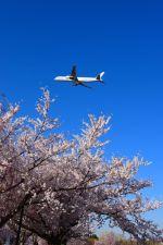 まいけるさんが、成田国際空港で撮影したキャセイパシフィック航空 777-367の航空フォト(写真)