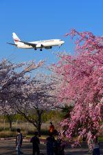 まいけるさんが、成田国際空港で撮影した日本航空 737-846の航空フォト(写真)