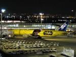 空飛ぶぽん吉☆さんが、羽田空港で撮影した全日空 777-281/ERの航空フォト(写真)