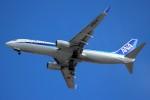 ばっきーさんが、新千歳空港で撮影した全日空 737-881の航空フォト(写真)