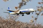 take_2014さんが、成田国際空港で撮影した全日空 777-381/ERの航空フォト(飛行機 写真・画像)
