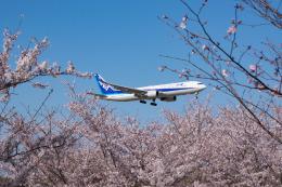 しぃさんが、成田国際空港で撮影した全日空 767-381/ERの航空フォト(飛行機 写真・画像)