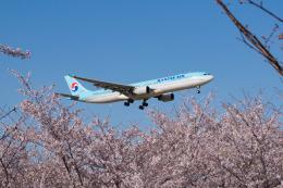 しぃさんが、成田国際空港で撮影した大韓航空 A330-323Xの航空フォト(飛行機 写真・画像)
