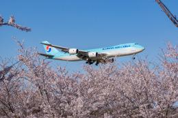 しぃさんが、成田国際空港で撮影した大韓航空 747-8B5F/SCDの航空フォト(飛行機 写真・画像)