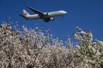 竜747さんが、羽田空港で撮影した日本航空 767-346の航空フォト(写真)