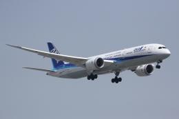 しゃこ隊さんが、上海虹橋国際空港で撮影した全日空 787-9の航空フォト(飛行機 写真・画像)