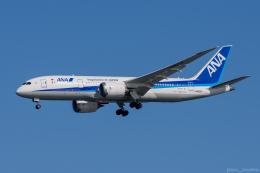 ぱん_くまさんが、羽田空港で撮影した全日空 787-8 Dreamlinerの航空フォト(写真)