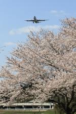 多楽さんが、成田国際空港で撮影したエア・タヒチ・ヌイ A340-313Xの航空フォト(写真)