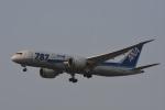 Kilo Indiaさんが、チャトラパティー・シヴァージー国際空港で撮影した全日空 787-8 Dreamlinerの航空フォト(写真)
