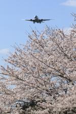 多楽さんが、成田国際空港で撮影したアメリカン航空 777-223/ERの航空フォト(写真)