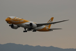 uhfxさんが、関西国際空港で撮影したスクート 787-8 Dreamlinerの航空フォト(飛行機 写真・画像)
