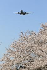 多楽さんが、成田国際空港で撮影したユナイテッド航空 777-224/ERの航空フォト(写真)