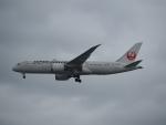 Tき/九州急行さんが、羽田空港で撮影した日本航空 787-8 Dreamlinerの航空フォト(写真)