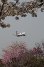 じゃりんこさんが、成田国際空港で撮影したフェデックス・エクスプレス MD-11Fの航空フォト(写真)