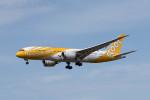 ポン太さんが、成田国際空港で撮影したスクート 787-8 Dreamlinerの航空フォト(写真)