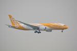 LEGACY-747さんが、香港国際空港で撮影したスクート 787-8 Dreamlinerの航空フォト(飛行機 写真・画像)
