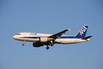 SHOさんが、成田国際空港で撮影した全日空 A320-214の航空フォト(写真)