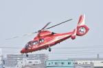 蒼い鳩さんが、八尾空港で撮影した大阪市消防航空隊 AS365N3 Dauphin 2の航空フォト(写真)