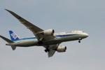 空の旅人さんが、羽田空港で撮影した全日空 787-8 Dreamlinerの航空フォト(写真)