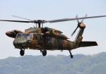 LOTUSさんが、八尾空港で撮影した陸上自衛隊 UH-60JAの航空フォト(写真)