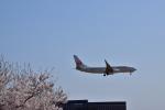 BOEING737-400SWALさんが、成田国際空港で撮影した日本航空 737-846の航空フォト(写真)