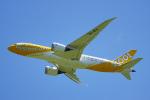 ちゃぽんさんが、成田国際空港で撮影したスクート 787-8 Dreamlinerの航空フォト(写真)